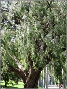 trees_34