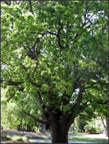 trees_35