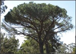 trees_37