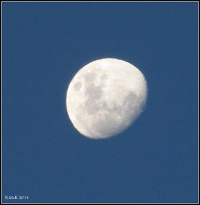 early evening moon