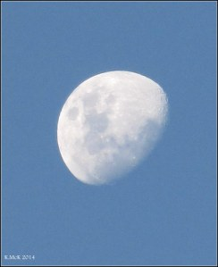 early evening moon_1