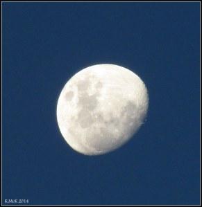 evening moon_2