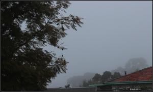 fog_7