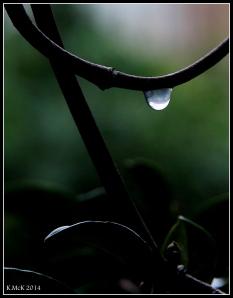 raindrops_1