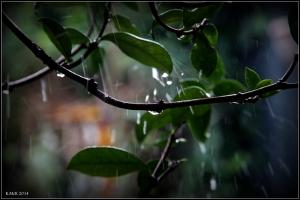 raindrops_10