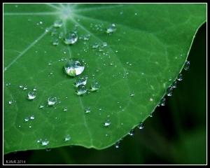 raindrops_12