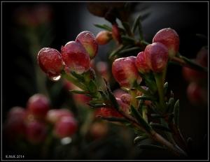 raindrops_13