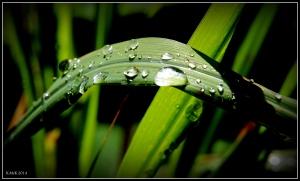 raindrops_17