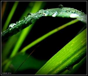 raindrops_18