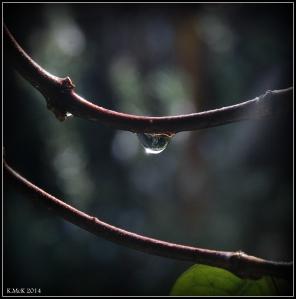 raindrops_8