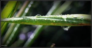 raindrops_9