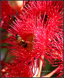 bees_2