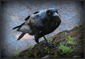bird_7
