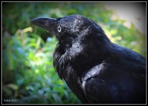 bird_9