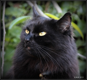 cat_11