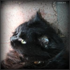 cat_1