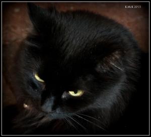 cat_3