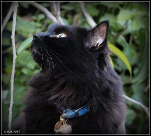 cat_7