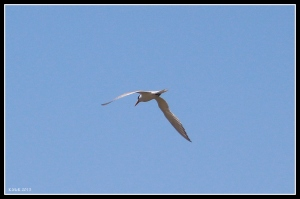 flight_tern_1