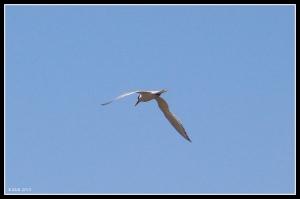 flight_tern_1