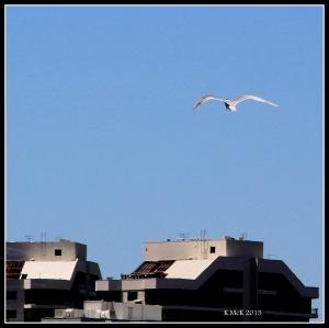 flight_tern_2