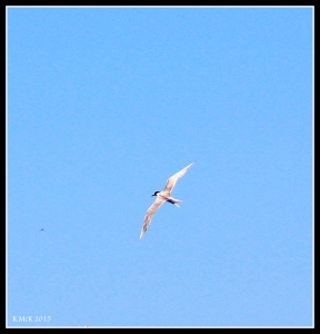 flight_tern_3