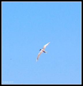 flight_tern_3