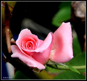 flower_1