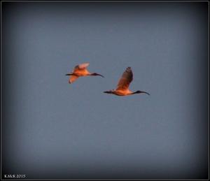 flying_4