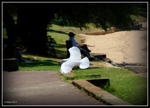 birds_15