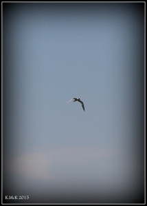 birds_17