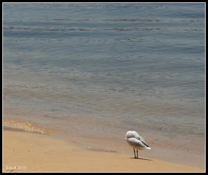 birds_19
