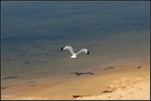 birds_26