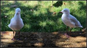 birds_29