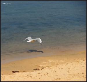 birds_32