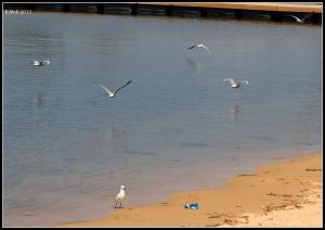 birds_33
