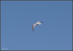 birds_34