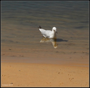 birds_35
