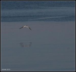 birds_38