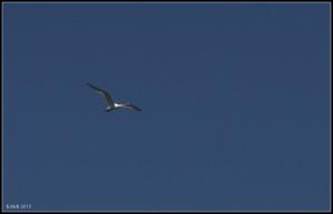 birds_39