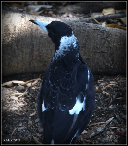 birds_42