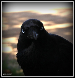 birds_46