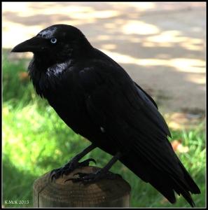 birds_47