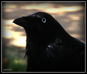 birds_48