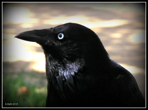 birds_49