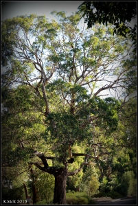 daglish trees_15
