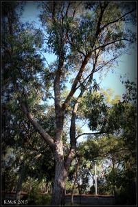daglish trees_16