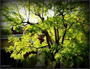daglish trees_20