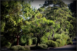 daglish trees_23