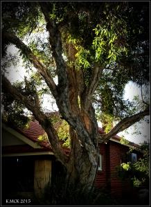 daglish trees_24
